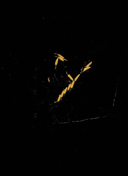 http://iaaa.free.fr/files/gimgs/157_pollen-pistil01-copie.jpg